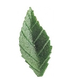 HOJA OBLEA verde oscuro 4,5 cm 1.000 u.